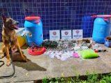 Irará: Drogas são identificadas em ação policial por cão farejador